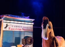 A photo of Hamish the pantomime horse from Black Beauty. The horse is brown with a white nose and long eyelashes and he is standing in front of a horsebox which reads 'The Famous McCuddy brother's Equestrian Illusionists'